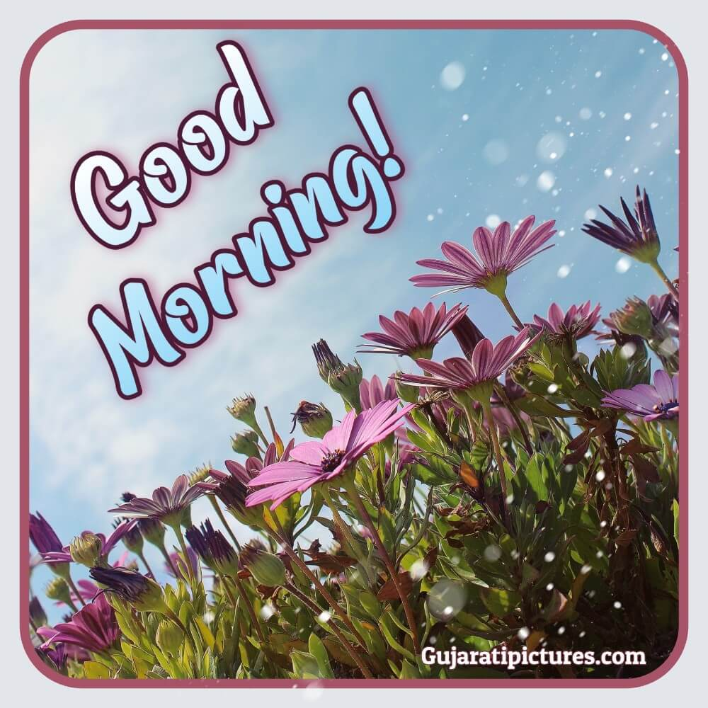 Good Morning Whatsapp Pic Gujaratipictures Com